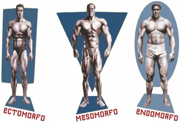Três homens musculosos, representando cada biotipo de corpo que o ser humano pode ter
